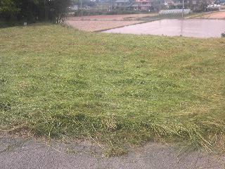 第二圃場草刈り後