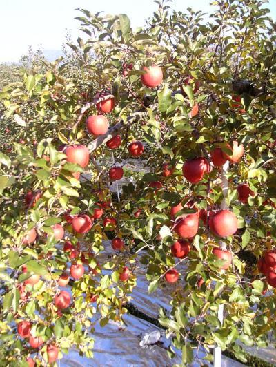 06-11-25_13-13_convert_20091208231944.jpg