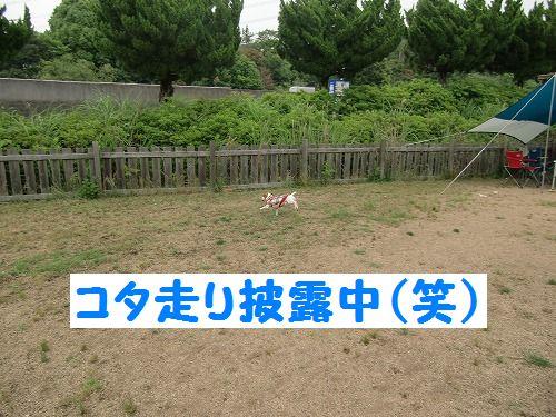 CIMG0187.jpg