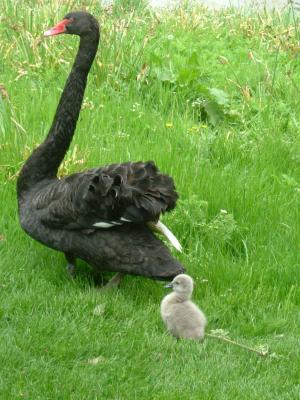 黒鳥4_convert_20100126211351