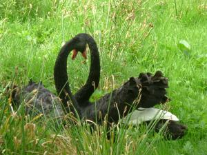 黒鳥5_convert_20100126211412