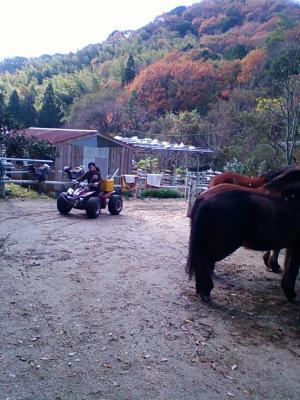 バギー馬訓練