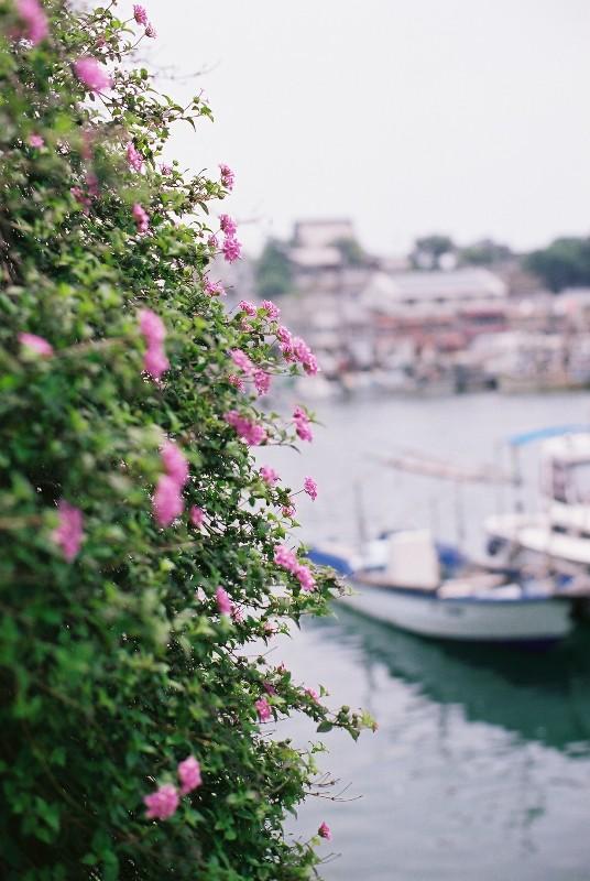 お花と漁船