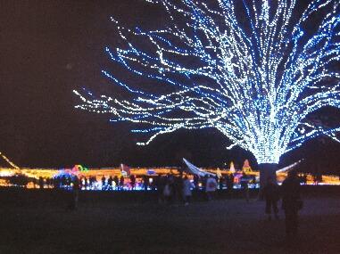 昭和記念公園2H21 12.14