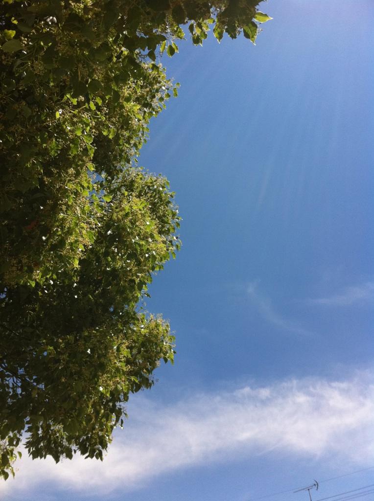 IMG_7767空&雲&木