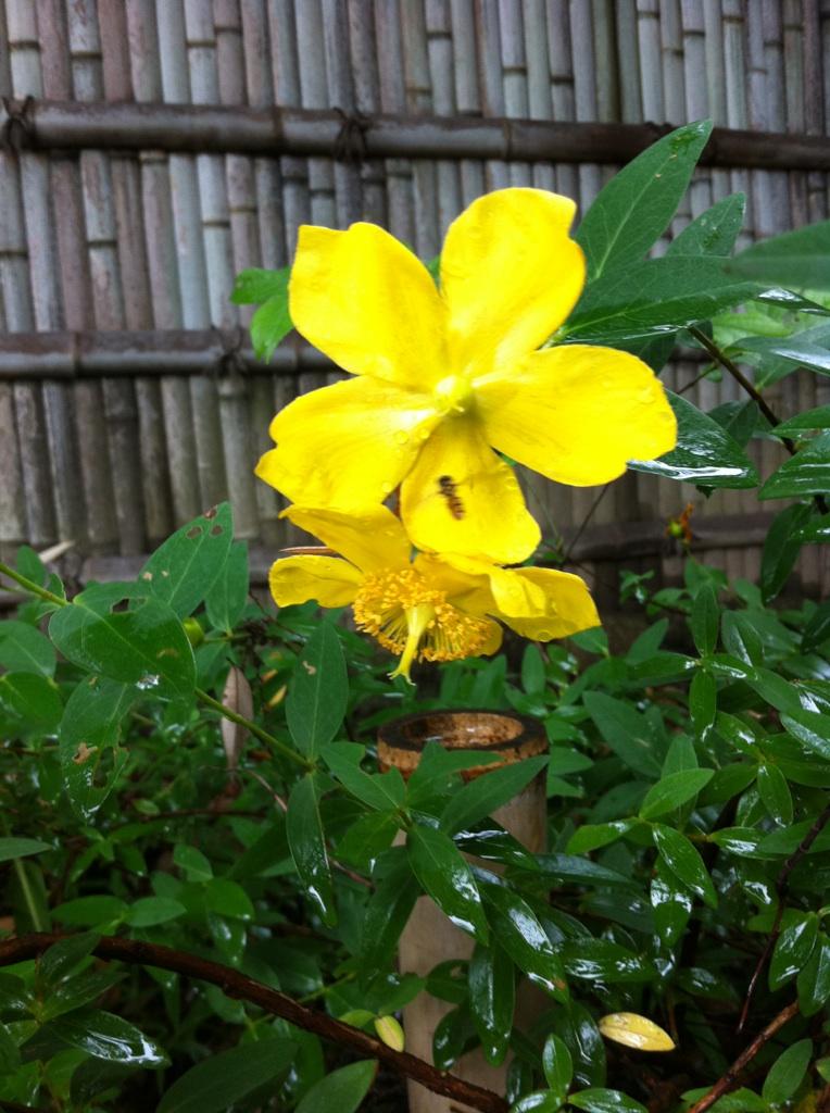 IMG_8574徳川園の花