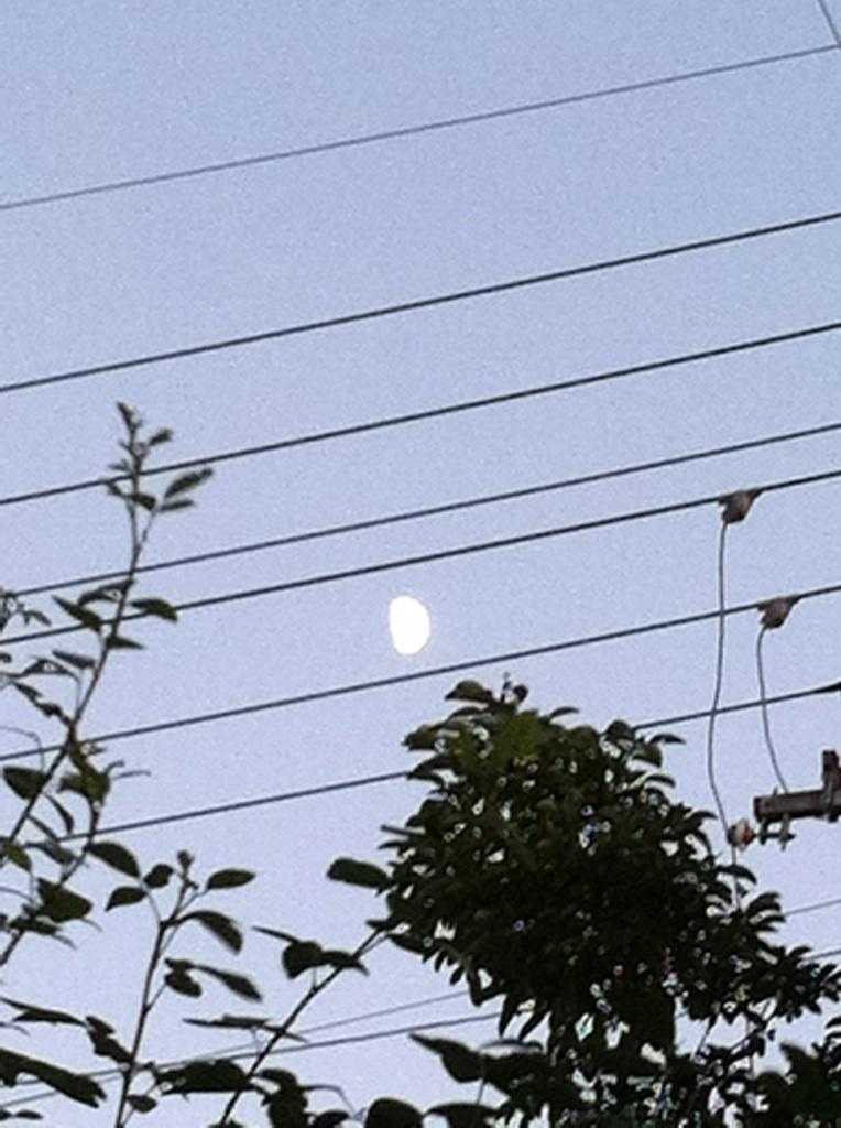 IMG_6555上弦の月