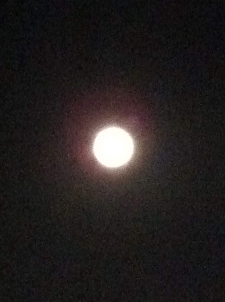 IMG_1274中秋の名月