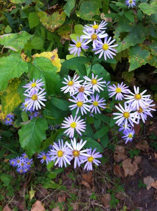 IMG_0220山荘の花