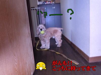 23-6-7がんもちぃ006