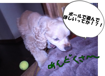 23-6-7がんもちぃ003