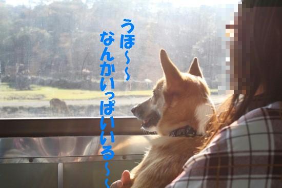 20091104_03.jpg