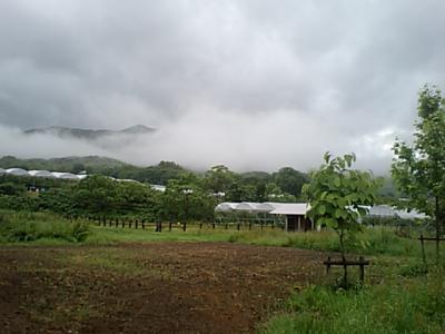 20110704-103808頂白山.jpg
