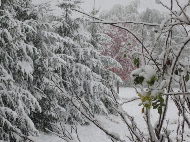 雪じゃー大雪じゃー
