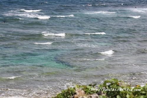 エメラルド サンゴ