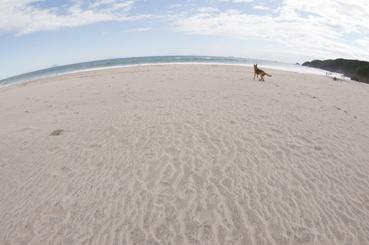 吉佐美海岸の犬