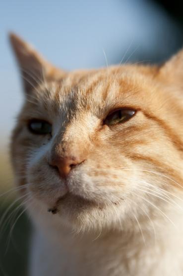 城ヶ崎の猫顔