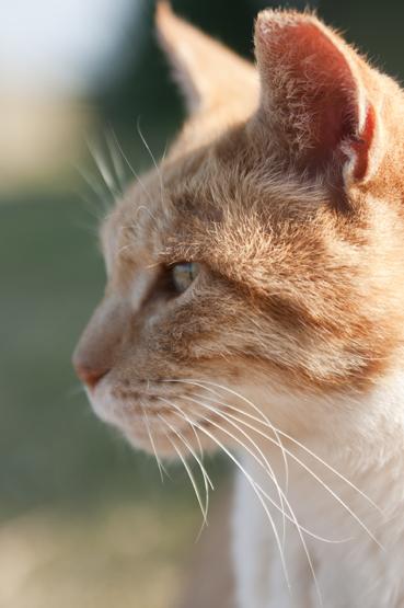 城ヶ崎の猫