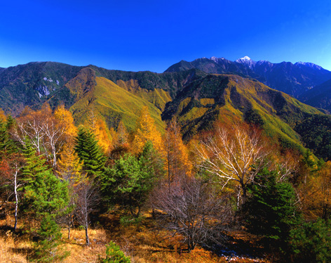 秋の鹿嶺高原