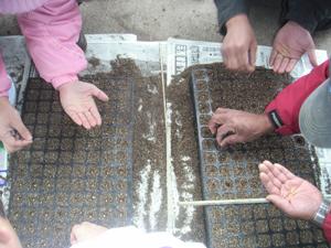 セルトレイ播種