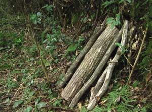 原木しいたけ栽培