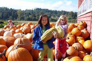 かぼちゃ畑1
