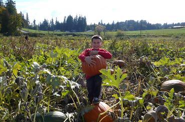 ジャックとかぼちゃ