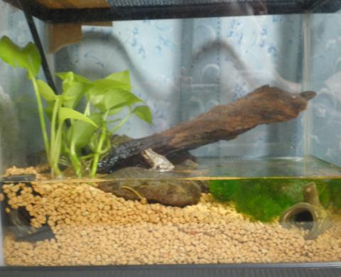 カエル飼育容器