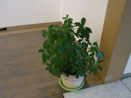 富山県デザイン展の鉢植え