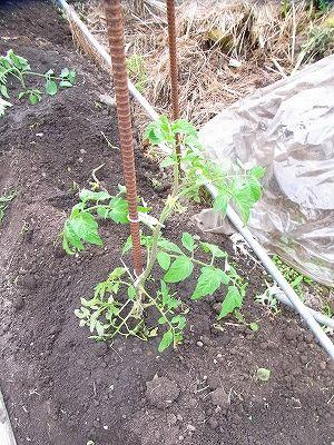 野菜苗の誘引補正2