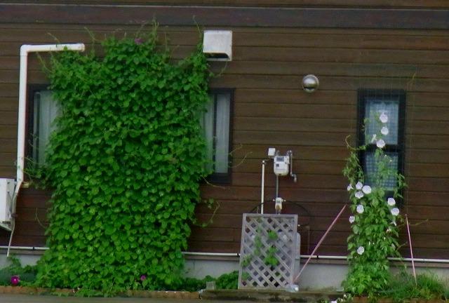 庄川水記念公園のライブ帰りのグリーンカーテン