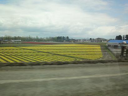 砺波のチューリップ畑on北陸自動車道
