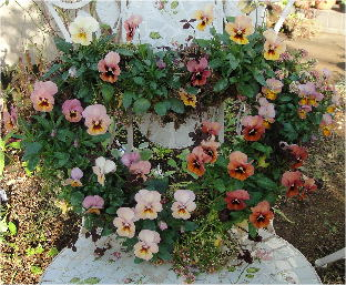 viola heart shape wreath