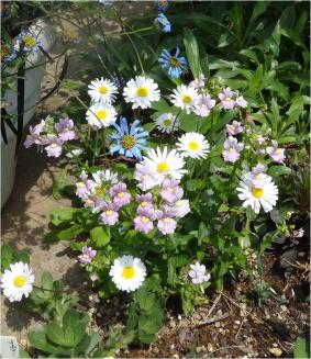 daisy01172.jpg