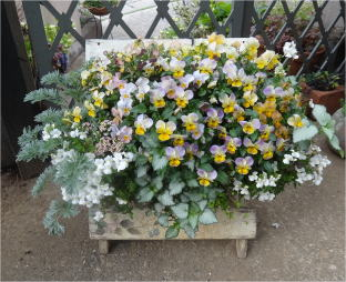 viola wall basket