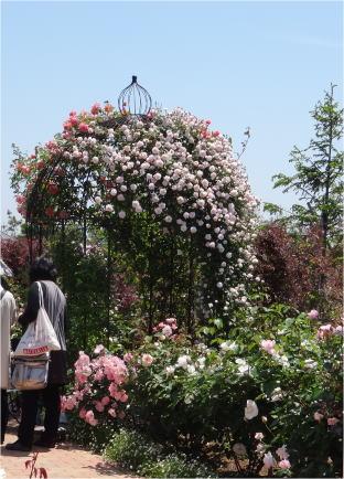 kana_garden04250.jpg