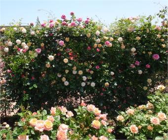 kana_garden04253.jpg