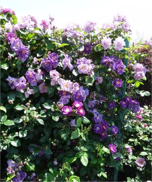 kana_garden04261.jpg