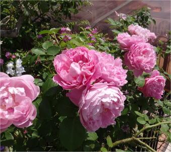 mary_rose05370.jpg
