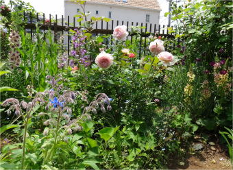 anise_garden