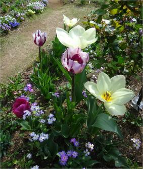 tulip00728.jpg