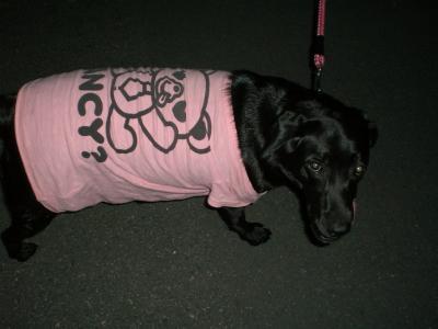 ピンクのTシャツでお散歩
