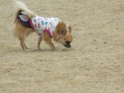 ココアは散歩大好き!!