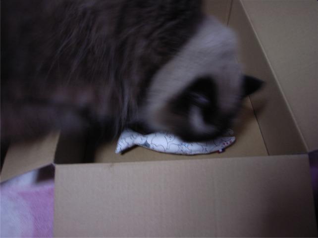 三たびネコ