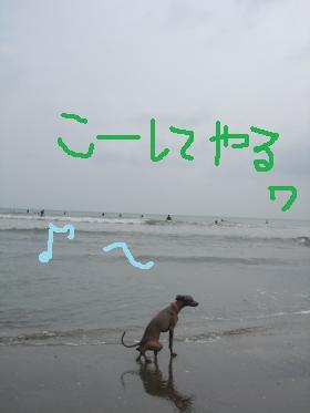 DSC02121_convert_20110525003504.jpg