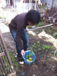柚子収穫3