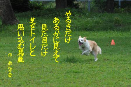 DSC_5142.jpg