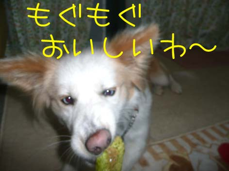 20080319_3