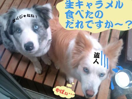 hokaido_4.jpg