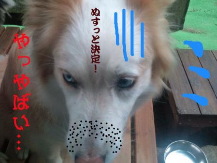 hokaido_7.jpg